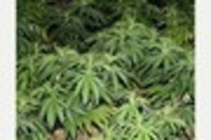 Jail sentence for man with cannabis farm on the outskirts of...