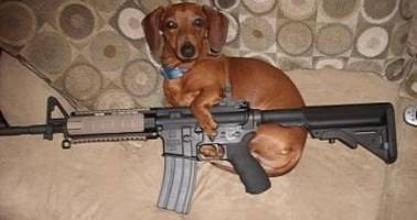 Dog Shoots Owner with a Rifle, Puts Him in the Hospital