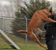 Army Reserve Private Injured By Police Dogs